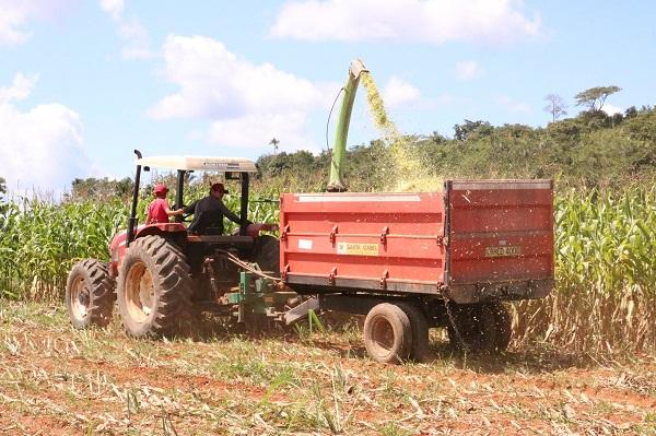 Exemplo de produção de silagem em Guarantã do Norte